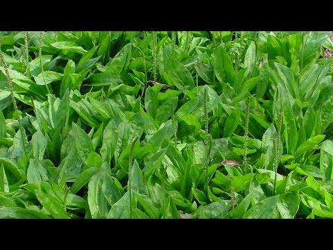 Clique e veja o vídeo Curso Produção Comercial de Plantas Medicinais