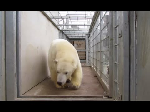 Migrants bump into polar bear after sneaking onto lorry to get to UK