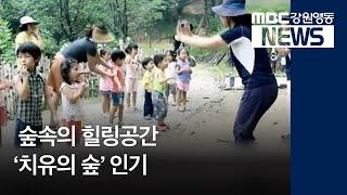 R)산림자원 활용 '치유의 숲' 인기
