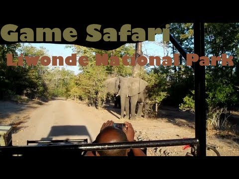 Safari Game Drive - Liwonde National Park, Malawi