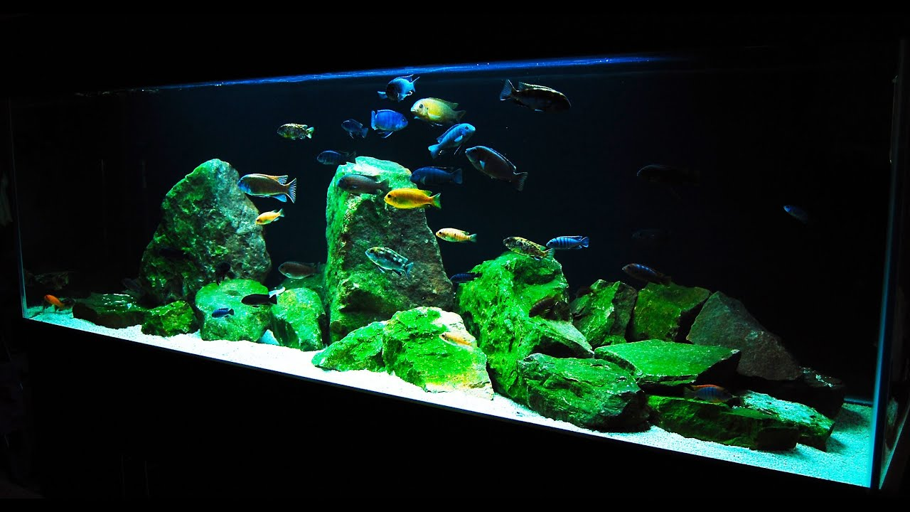 Sand For Sale >> How to Set up an African Cichlid Tank - Step by Step Guide ...