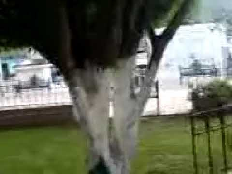 video 2.- zoocalo de huamuxtitlan pte 2