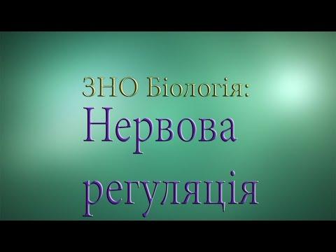 ЗНО Біологія  Нервова регуляція 1.