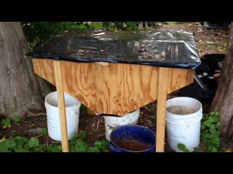 Chicken Feeding - Red Wiggler and Black Soldier Fly bins setup