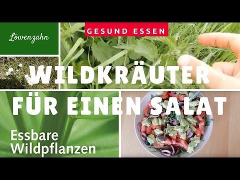Wildkräuter bestimmen, sammeln und essen mit Salat Rezept vegan, roh, glutenfrei