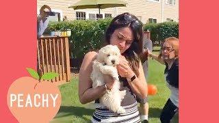 Puppy Proposals Make My Heart Melt | Best Proposals Ever!