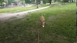 Dog Training | Dog on long line recall training | Solid K9 Training Dog Training