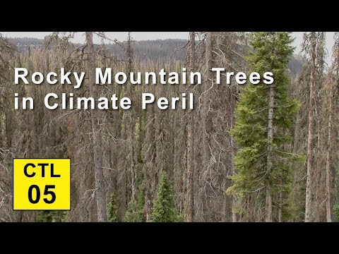 Climate, Trees, and Legacy: 05 - Rocky Mtn Trees in Climate Peril