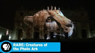 RARE: CREATURES OF THE PHOTO ARK | Impact of the Photo Ark | PBS