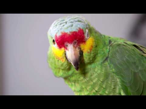 Weekly and daily health checks for your pet bird - Bucktons Care Guide