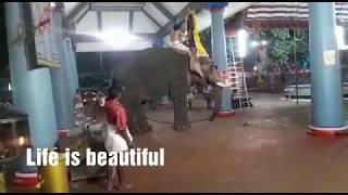 ഇടഞ്ഞ ആനയുടെ പരാക്രമം 2018.. / elephant attack.. 2018