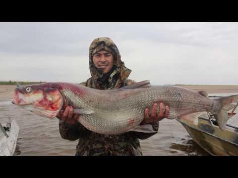 Северная рыбалка на НЕЛЬМУ