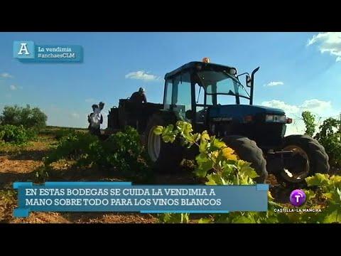 Ancha es Castilla-La Mancha - La Vendimia. 06.10.14