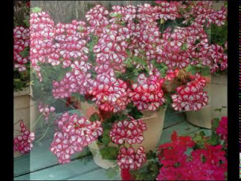 Rosario Flores - De mil colores