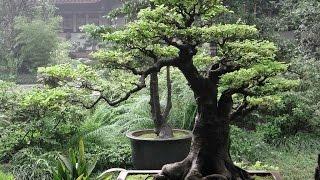 Triển lãm Hoa và Nghệ thuật bonsai 2017 tại Thanh Trì- Hà Nội