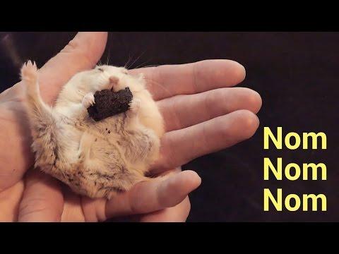 ハムスターが手の上で食べる姿にキュン死必至