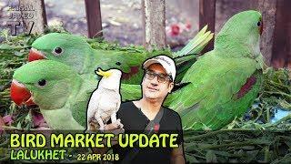 Lalukhet Birds Market   Weekly Update   Baby Parrot   Exotic Birds for Sale in Karachi   URDU/Hindi