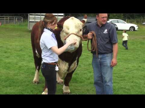 We were delighted to attend this year's 108th Annual Antrim show, Saturday 26th July 2014, at Shanes Castle. Antrim is an extremely important town for us. It...
