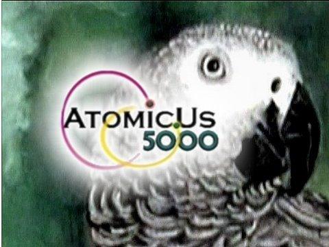 Congo African Grey Parrot [Psittacus erithacus erithacus] HD Video