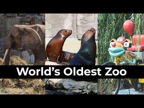 World's Oldest Zoo: Tiergarten Schönbrunn | Pandas, Orang-Utans & Best View Over Vienna