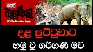 Balumgala 04-12-2017 Dala puttuwa