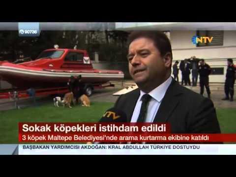 NTV - 3 Köpek Maltepe Belediyesi Arama Kurtarma Ekibine Katıldı