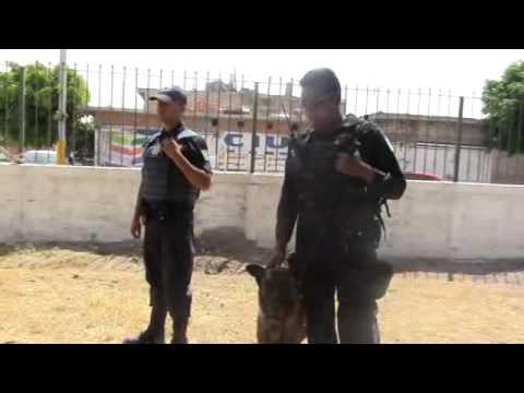 DAN DE BAJA A 30 ELEMENTOS DE LA POLICÍA MUNICIPAL EN CELAYA
