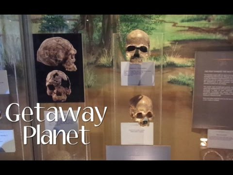 Lost in the Museum, snakes, crocs and friends :) || Getaway PlaneT