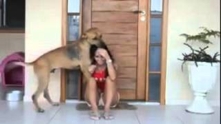 Download Touching Video of a Rescued Dog Shows his Gratitude! 3Gp Mp4