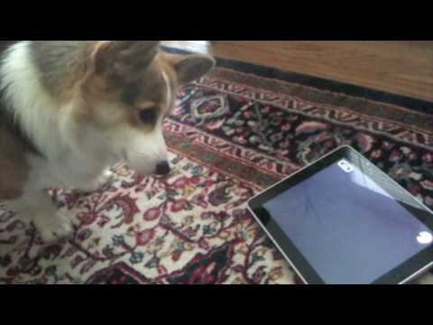Thumb iPad: Cats love it, Dogs hate it