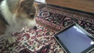 Thumb iPad: los Gatos lo adoran, los Perros lo odian