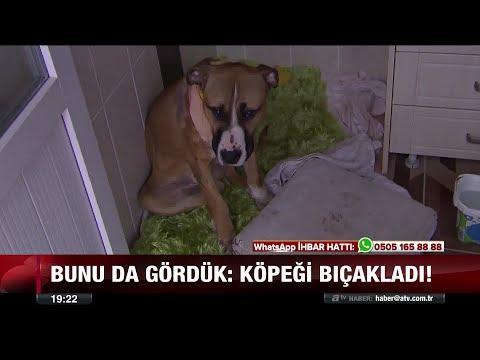Oyun oynamaya giden köpek bıçaklandı - 4 Aralık 2017