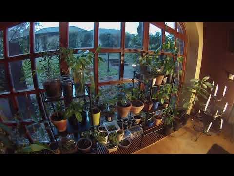 Mehr Platz Für Exotische Pflanzen Im Haus/ Updates