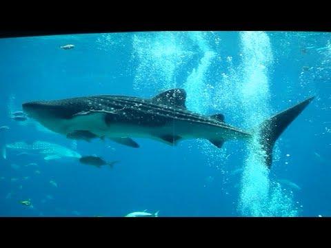 20th March 2013 - Georgia Aquarium