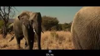 Elephant x