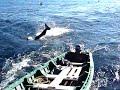 orka - ballenas orcas 1 parte. pesca de cerco purse seiner fishing vessel sardina