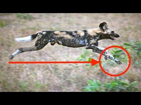 Tiere failen hart und haben Spass dabei - Part 6