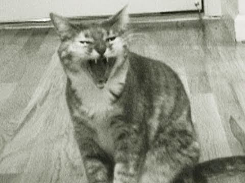 Kitty Criminal (Singing Cat Music Video)