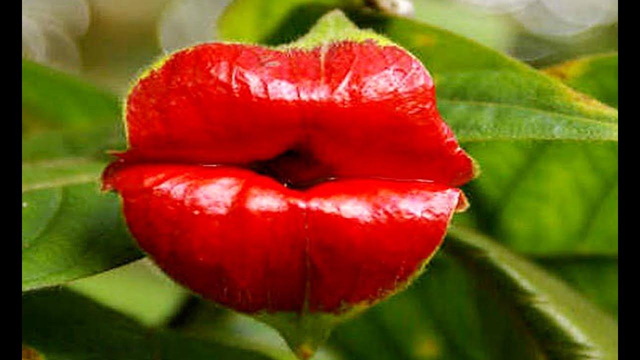 Дорогой цветок