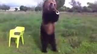 This is Russia and ordinary Russian bear