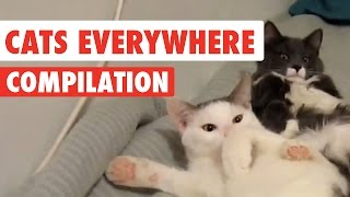 Cats Everywhere Video Compilation 2017
