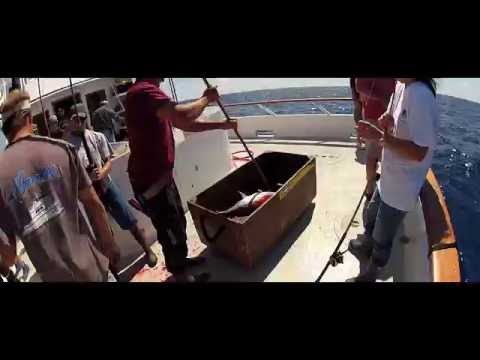 GoPro HD: FRESH ONE! - Tuna Fishing with Derek Mio and Family