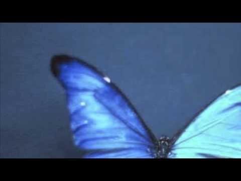 Lenny Kravitz - Butterfly