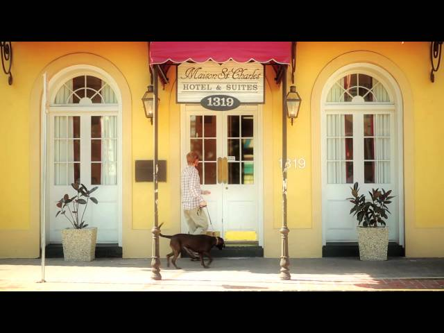 Dog Friendly Travel in New Orleans