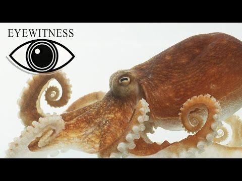 EYEWITNESS | Monster | S3E6