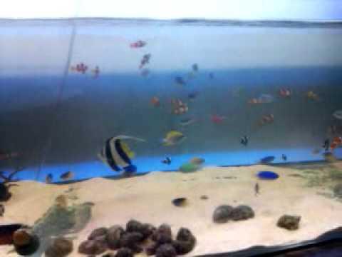 Marine Aquarium in Bangladesh part 4