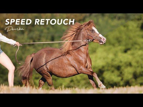 Devika [equine photography] thumbnail