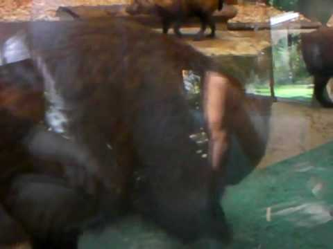 Bush Dog Video