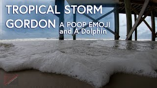 Tropical Storm Gordon, A Poop Emoji, A Dolphin and lots of Laughter