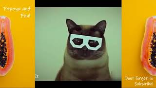funny animals CATS VS DOGS FUNNY COMPILATION!!